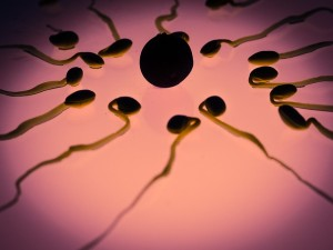 e030b70b20f61c3e81584d04ee44408be273e7dd19b7104993f8_640_fertility