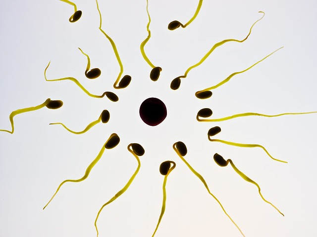 fertility photo